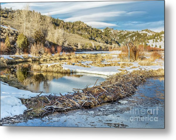 Winter On Beaver Swamp Metal Print