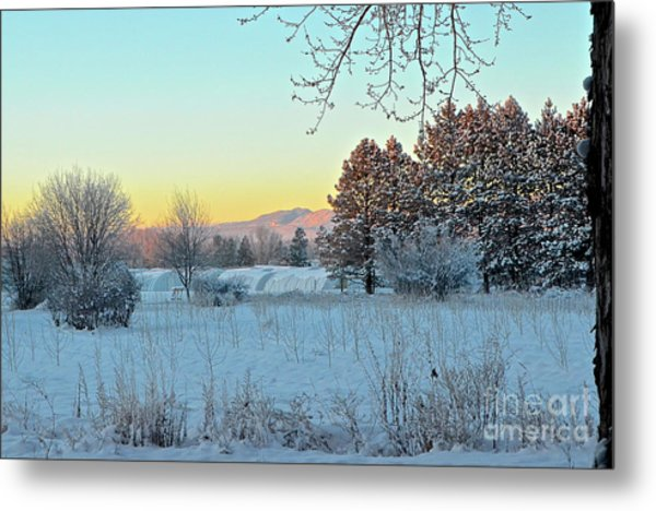 Winter On The Tree Farm Metal Print