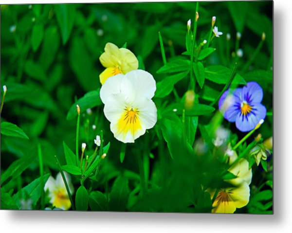Winter Park Violets 1 Metal Print