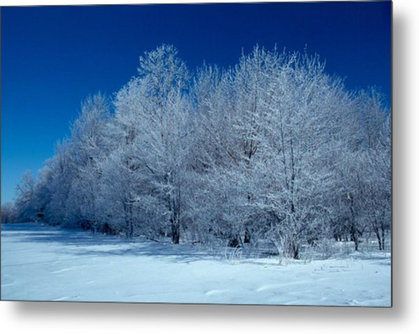 Winter Scene Metal Print by Raju Alagawadi