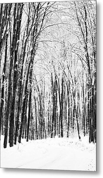 Winter Startk Metal Print