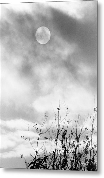 Winter Sun Metal Print by Randall Paar