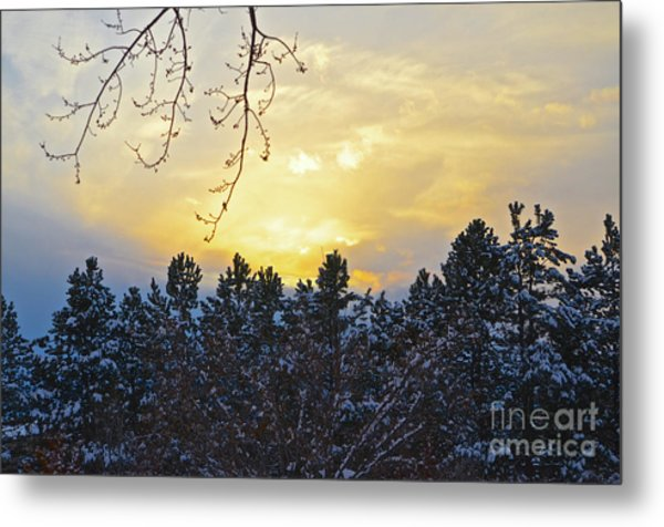 Winter Sunset On The Tree Farm #1 Metal Print