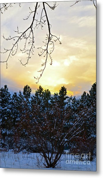 Winter Sunset On The Tree Farm #2 Metal Print
