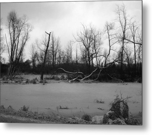 Winter Swamp Metal Print