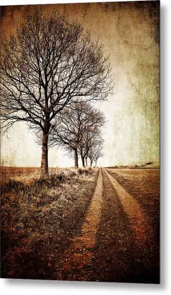 Winter Track With Trees Metal Print