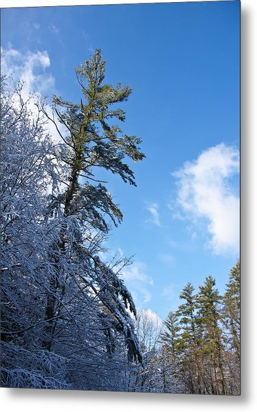 Winter Tree And Sky Metal Print by Edward Myers