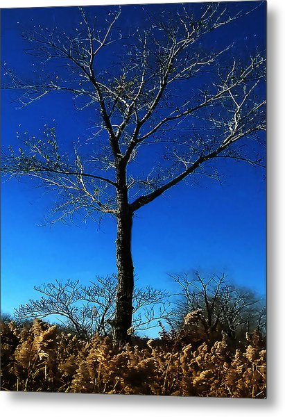 Winter Tree Metal Print