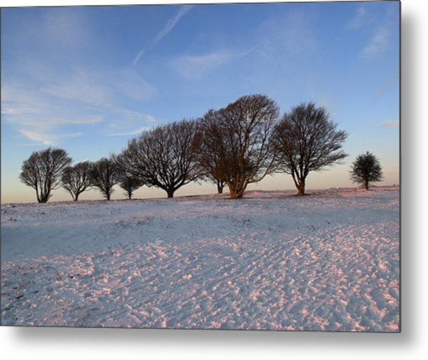 Winter Trees On The Ring Metal Print