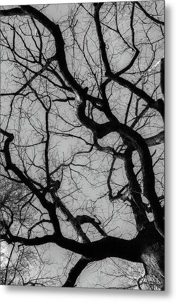 Winter Veins Metal Print