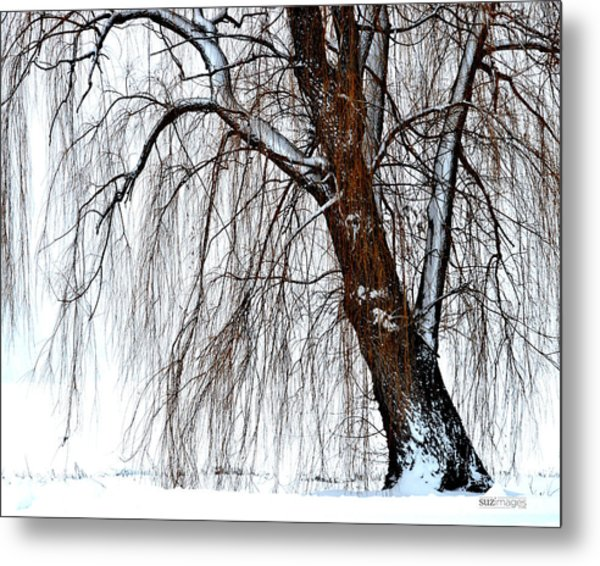 Winter Willow Metal Print