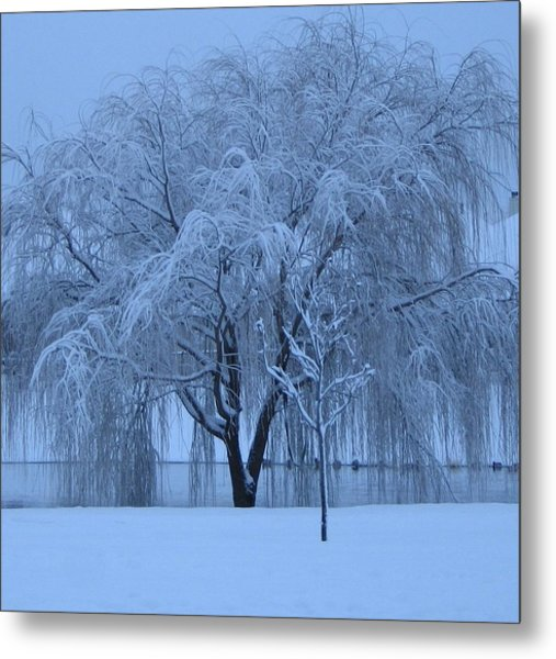 Winter Willow Tree Before Dawn_fort Worth_tx Metal Print