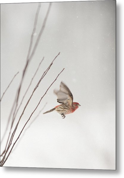 Winter Wind Surfing 1 Metal Print