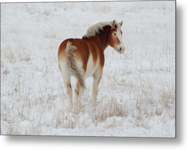 Winter Winds Metal Print