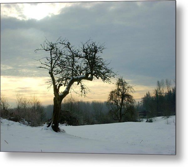 Wintergloom Metal Print by Barbara  White