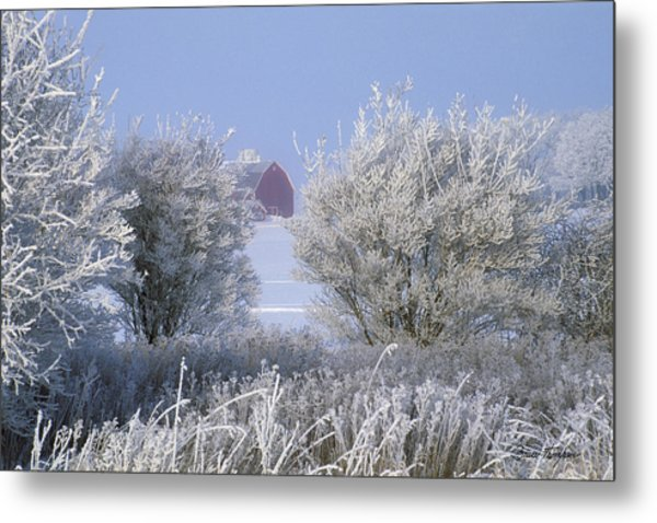 Winter's Embrace Metal Print