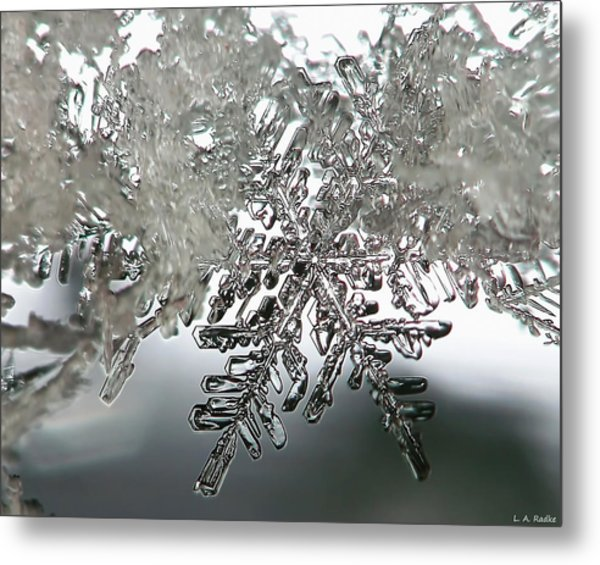 Winter's Glory Metal Print