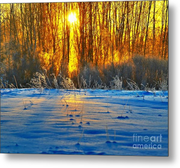 Winters Morning Metal Print by Robert Pearson