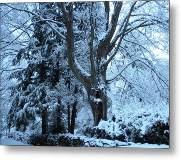 Winter's Touch Metal Print by Karen Moulder