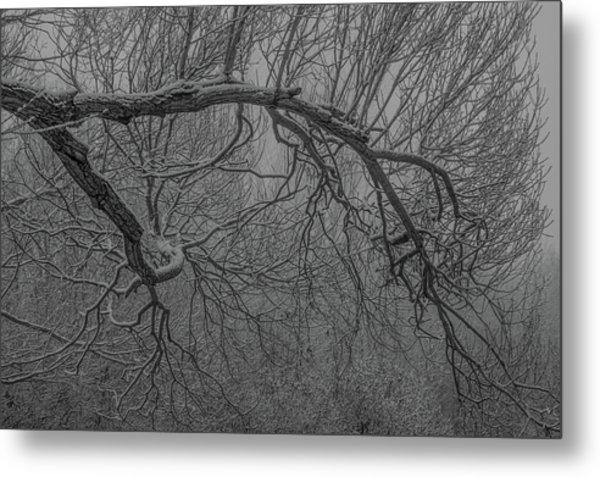Wintery Tree Metal Print