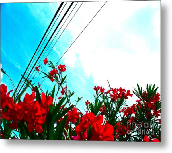 Wire Flowers Metal Print by Chuck Taylor