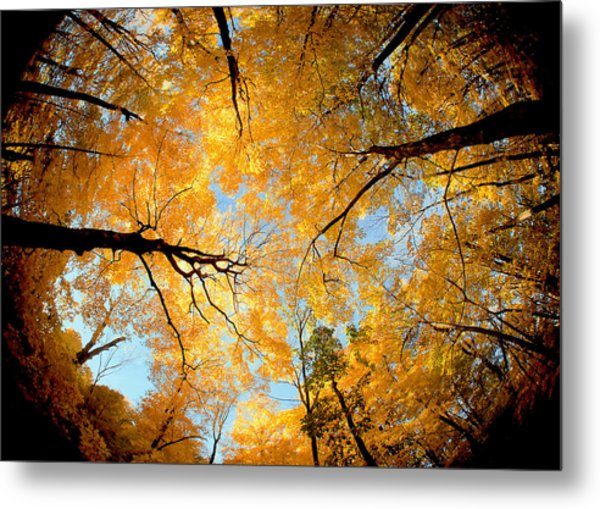 Wisconsin Canopy Metal Print