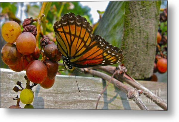 With The Grape Metal Print by PJ  Cloud