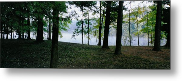 Within Sight Of A Lake Metal Print by Tom Hefko