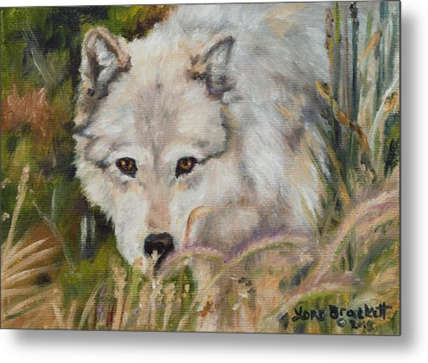 Wolf Among Foxtails Metal Print