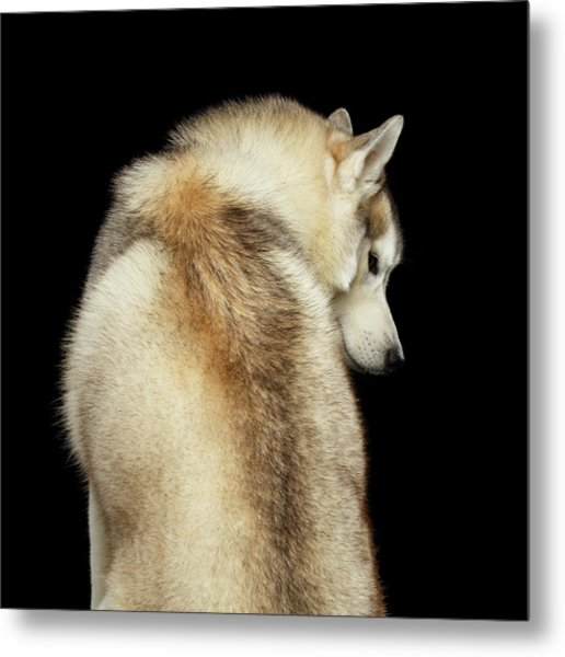 Wolf In Soul Metal Print
