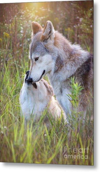 Wolf Soul Mates Metal Print