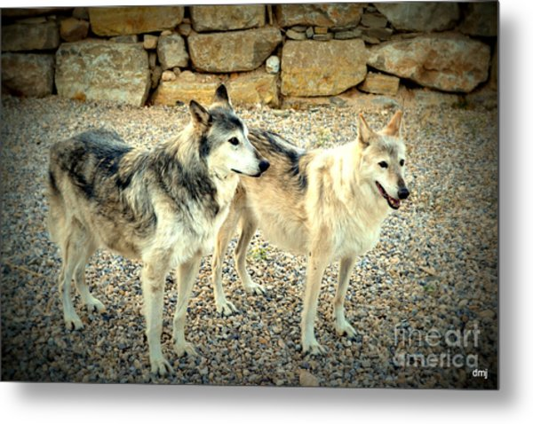wolves XI Metal Print