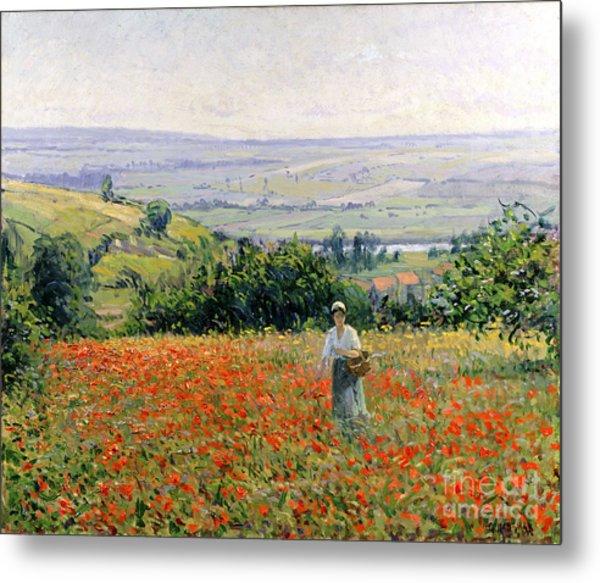 Woman In A Poppy Field Metal Print