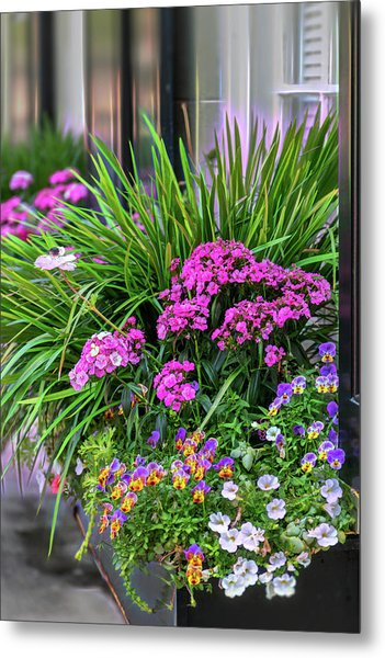 Wonderful Window Boxes Of Charleston Metal Print
