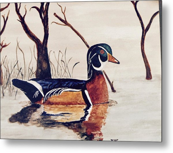 Wood Duck No. 2 Metal Print