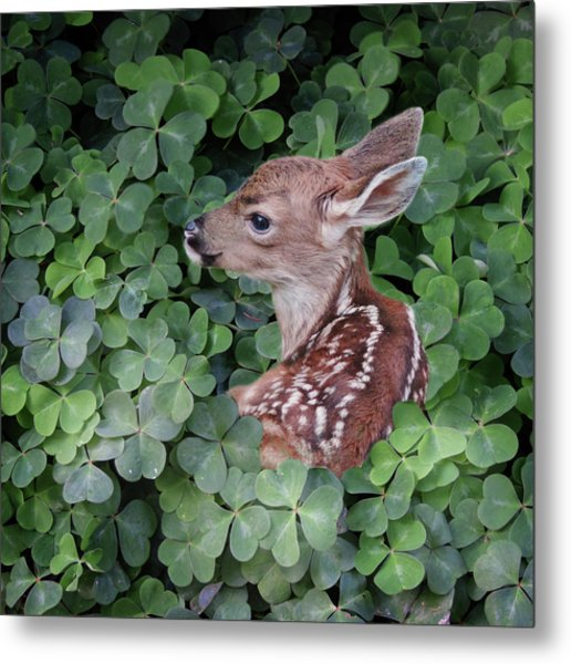 Metal Print featuring the photograph Wood Sorrel Blanket by Sally Banfill