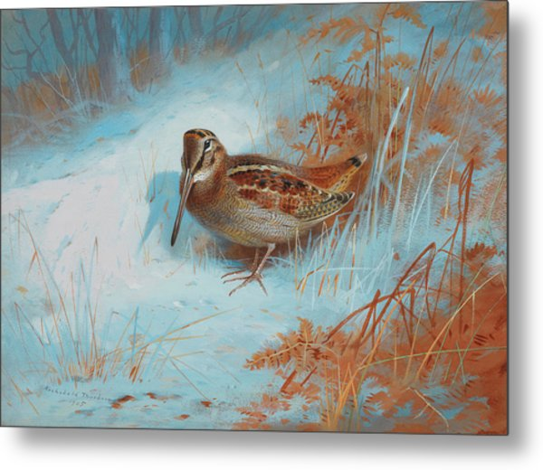 A Woodcock In The Snow Metal Print