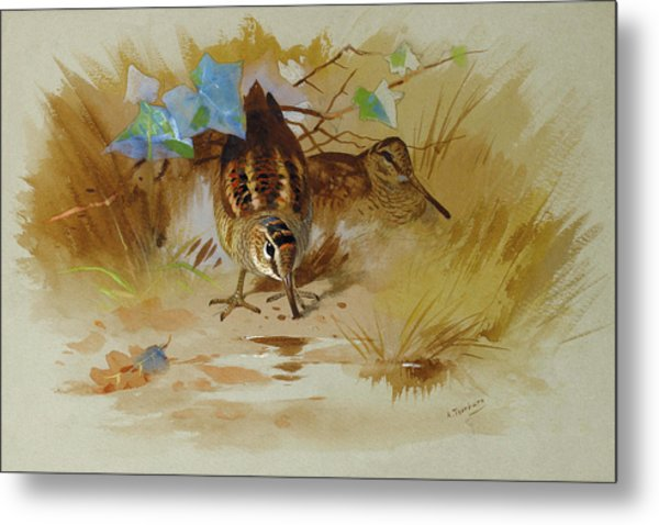 Woodcock In A Sandy Hollow By Thorburn Metal Print