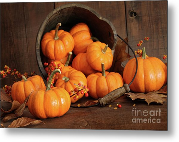 Wooden Bucket Filled With Tiny Pumpkins Metal Print