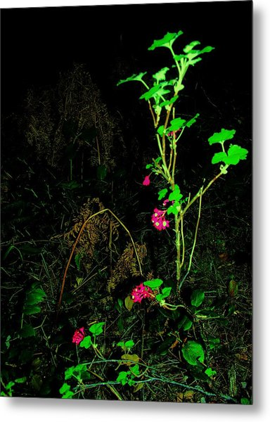 Woodland Bush Metal Print by Mel Crist