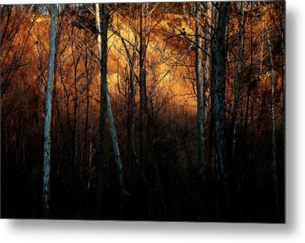 Woodland Illuminated Metal Print