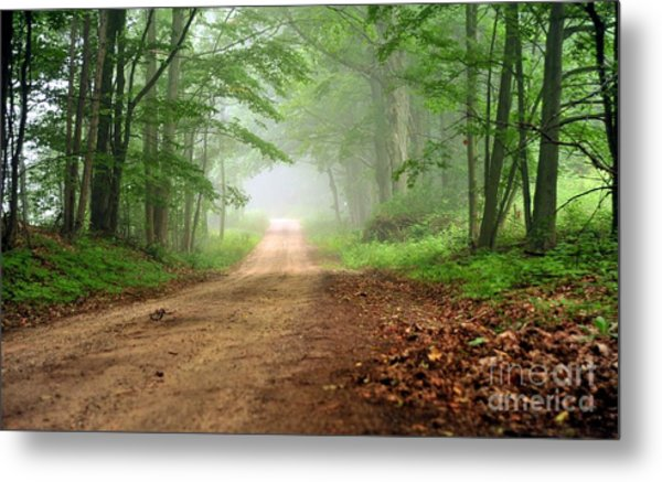 Woodland Journey Metal Print