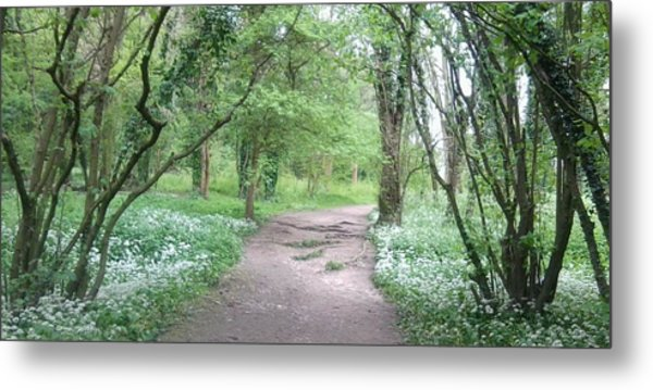 Woodland Path 1 Metal Print