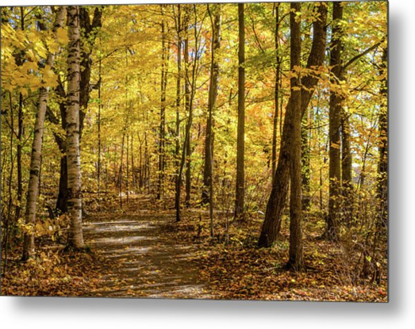 Metal Print featuring the photograph Woodland Trail At Mer Bleue by Rob Huntley