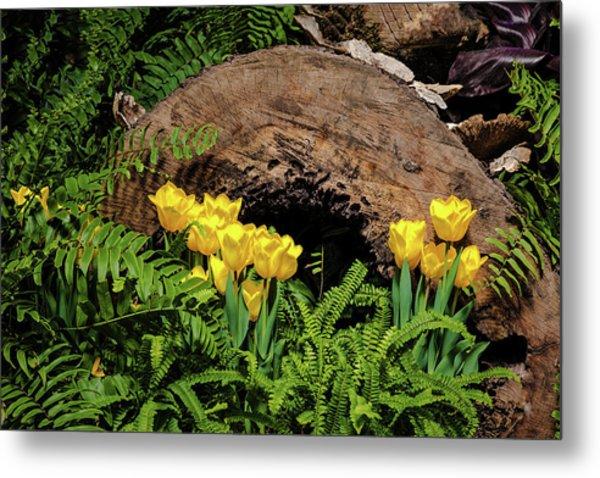 Woodland Tulip Garden Metal Print