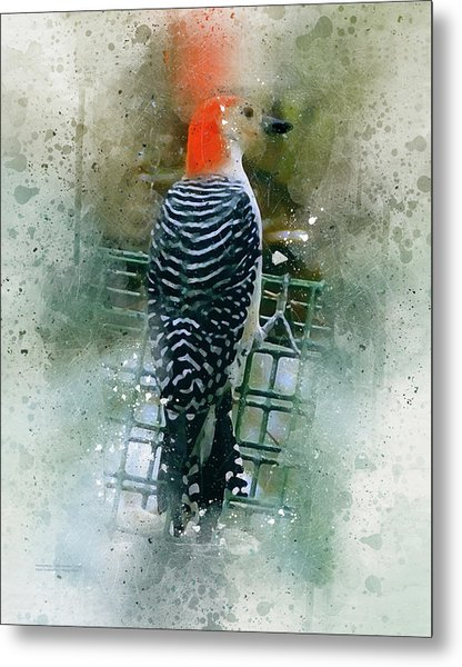 Woodpecker-2-a-8 Metal Print
