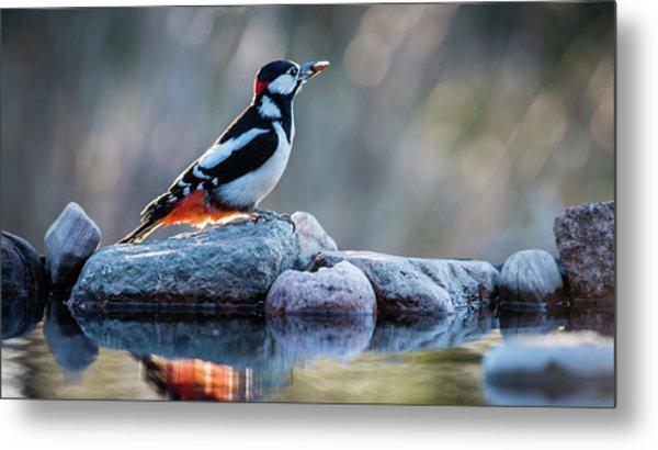 Woodpecker In Backlight Metal Print