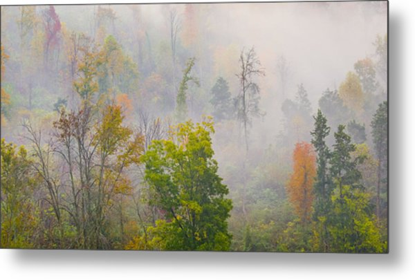 Woods From Afar Metal Print