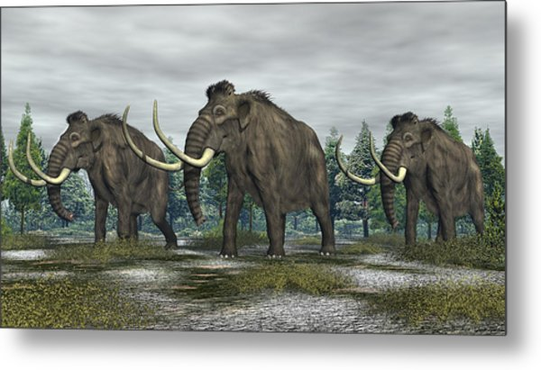Woolly Mammoth Metal Print