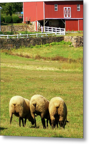 Wooly Bully Metal Print